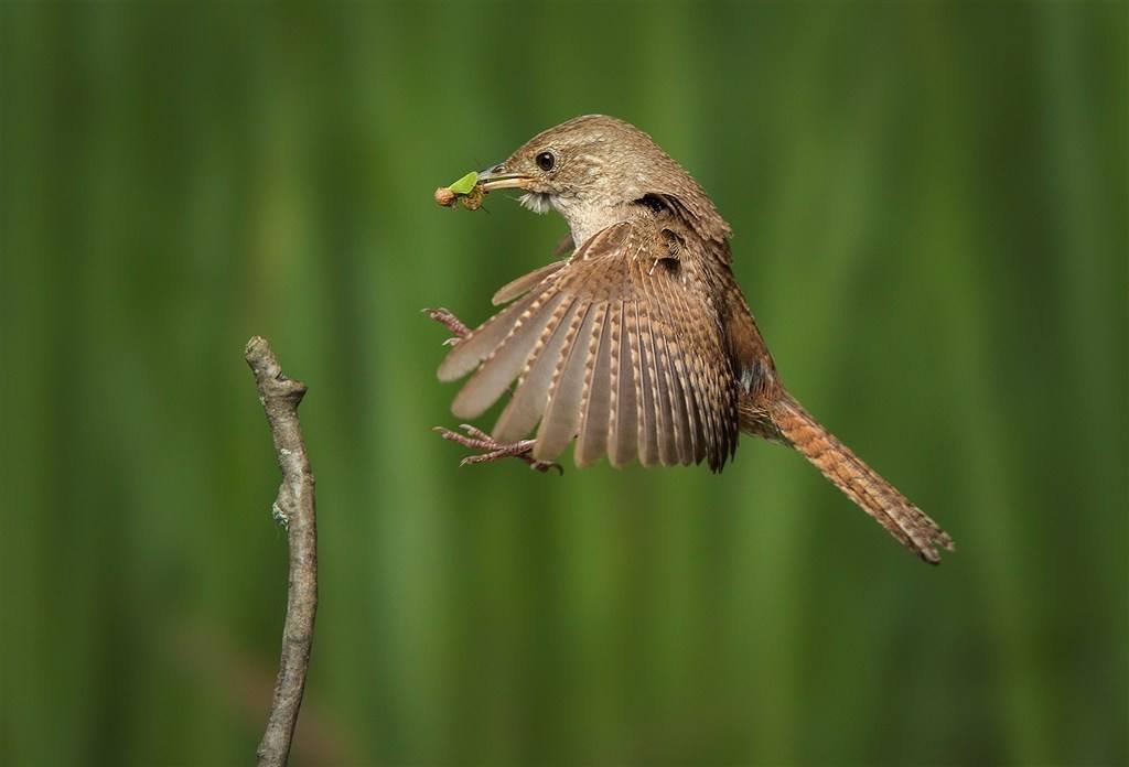 如何给鸟类选择饲养环境?鸟类的环境要求